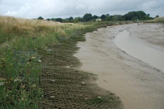 inter-tidal bank stabilisation