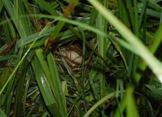 Moorhen eggs Chisenbury compton bridge 1200